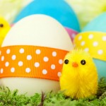 chicks-and-easter-eggs